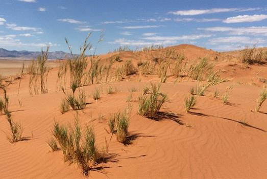 Speargrass recruit sandy microbes for help