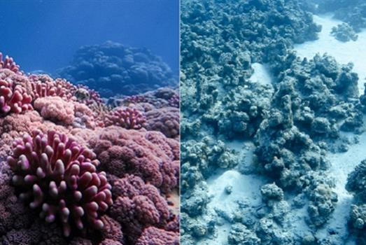 Changing how we predict coral bleaching