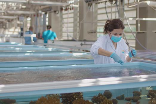 Probiotics for corals boost resilience