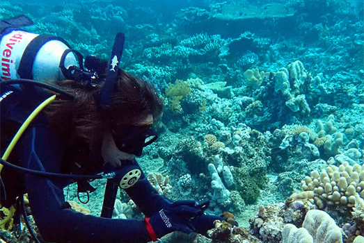 Dozens of new corals discovered on Australia's Great Barrier Reef