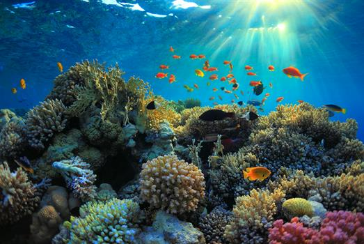 The biodiversity of coral reefs